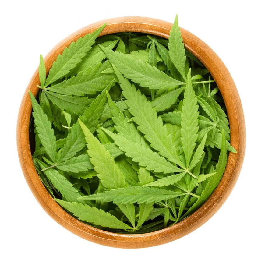 Cannabis Leaves in a bowl