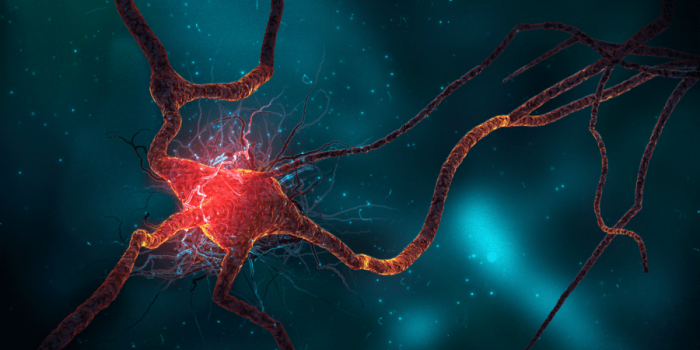Study Suggests Cannabis Supports Neurogenesis: The Growth of New Brain Cells