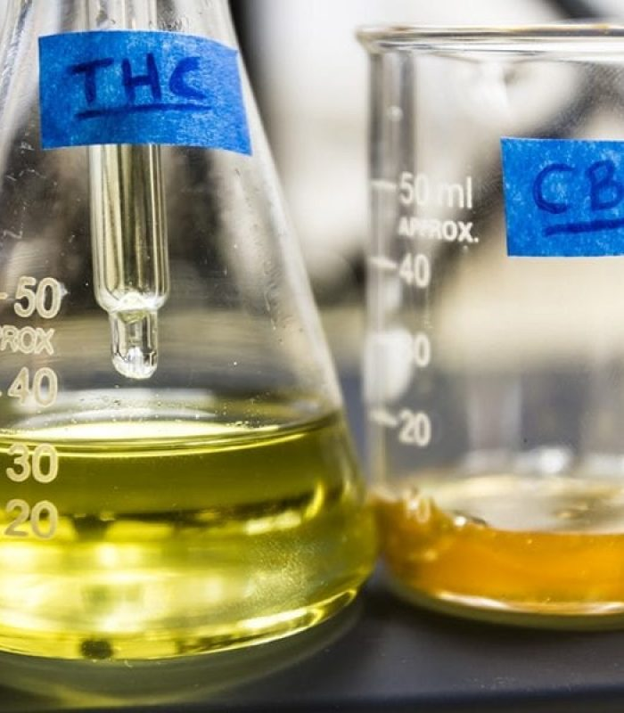 THC and CBD: Do You Really Know the Difference?