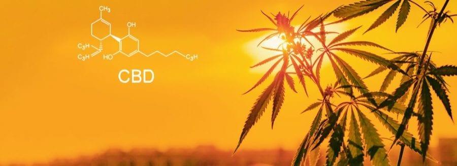 cannabis, medical cannabis, cannabinoids, CBD, THC, melanoma, skin cancer, cancer treatment, tumours, moles, CBD