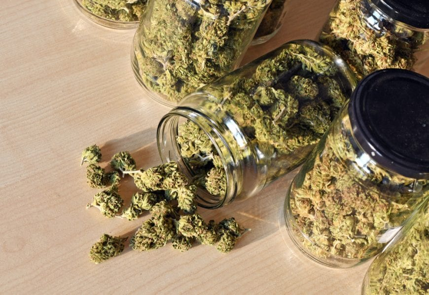 Buds in a glass container