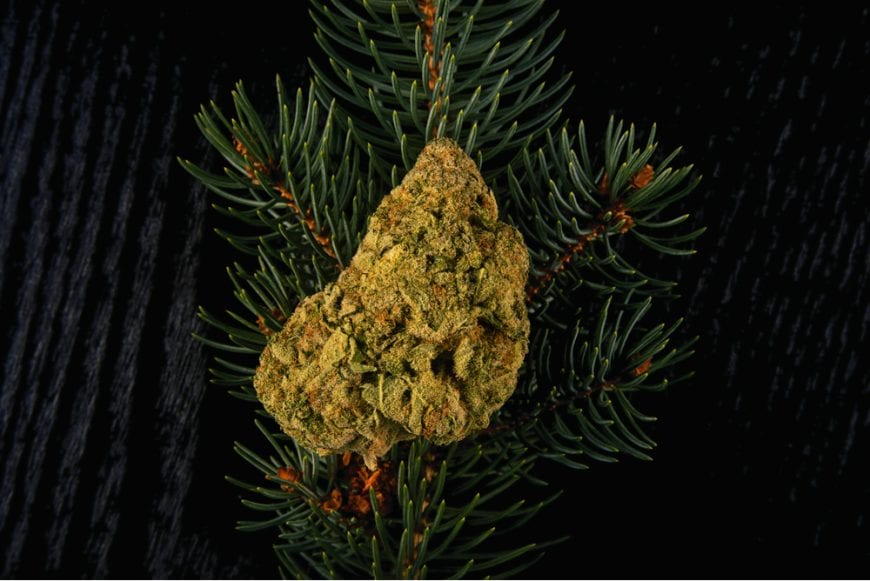 Cannabis but resting on pine, flavonoid