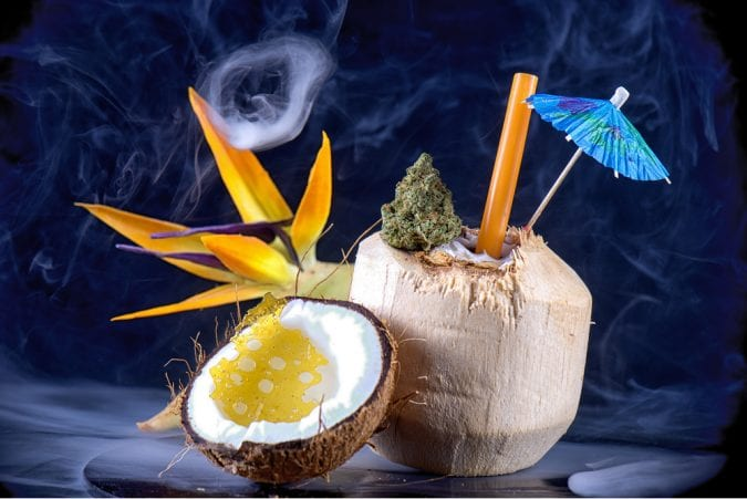 Coconut and cannabis but in smoking display