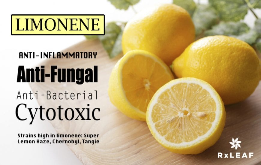 limolene terpene infographic to explain how do you know which strain to buy