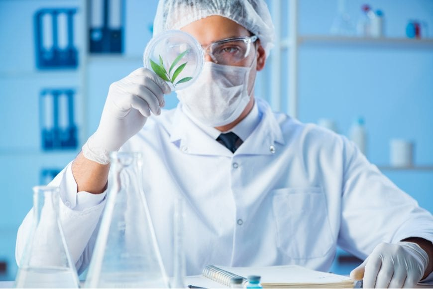 Cannabis Researcher