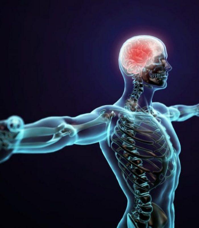 How Do Cannabinoid Receptors Work in the Human Body?