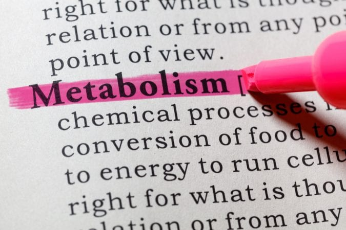 Il metabolismo nel dizionario viene evidenziato in rosa