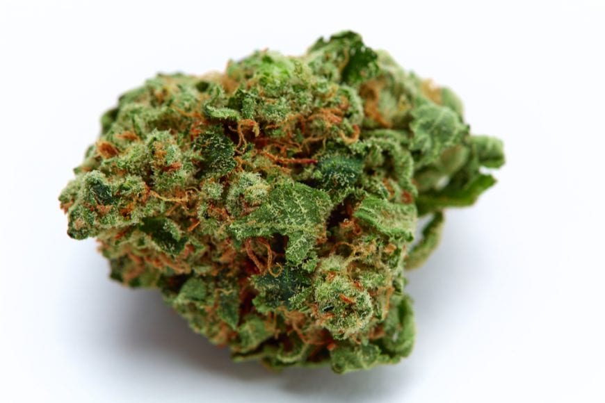 Close up of Cannabis Bud with trichomes visible. This is the type that helped Jill through end stage liver disease