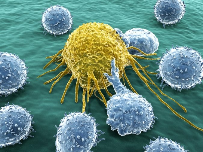 White blood cells attacking cancer