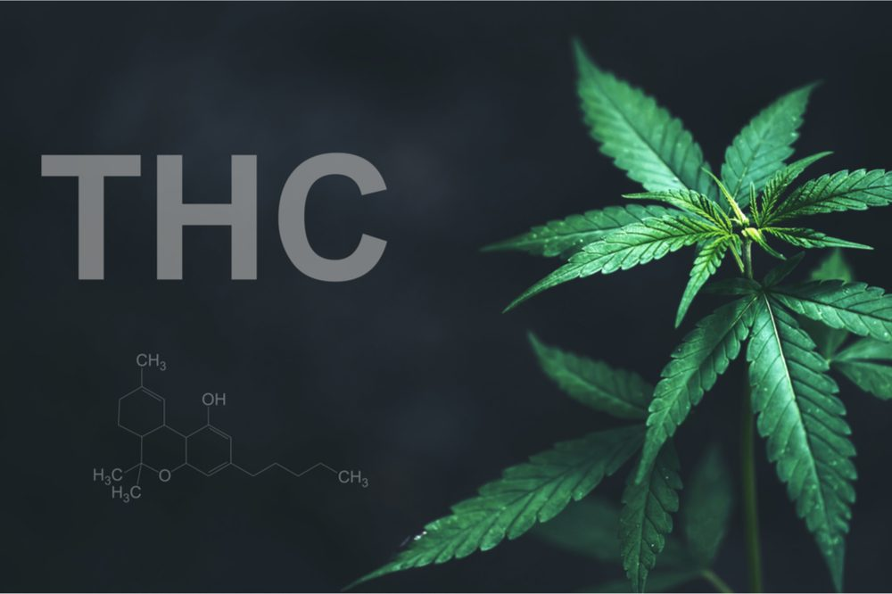 The Importance of THC in Cannabis for Patients