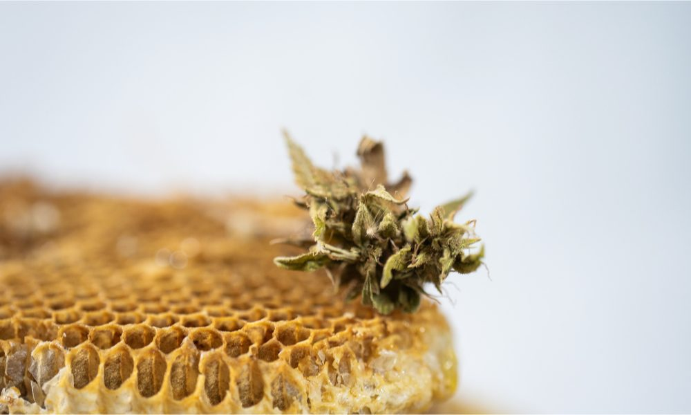 cannahoney represented by honey comb with cannabis nug resting on top