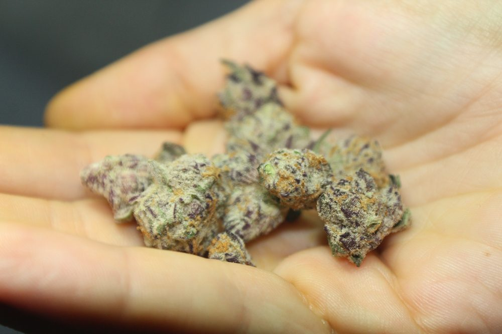 Purple Weed is Legendary, But is it Real?