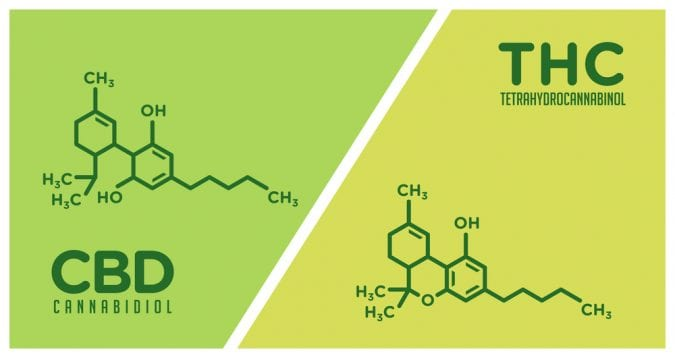 Drawing of the chemical compounds of CBD and THC