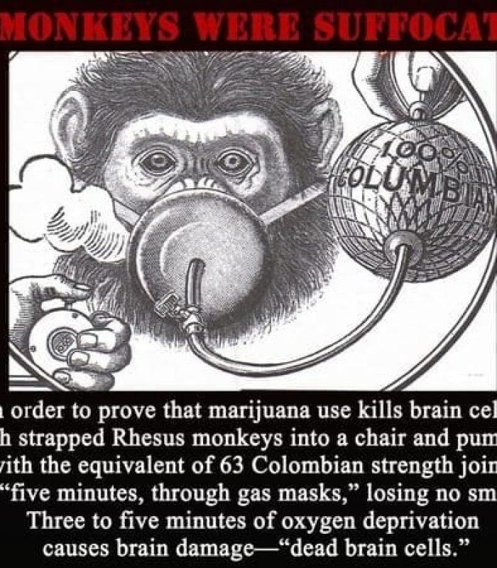 Cannabis Kill Brain Cells? The Study That Started the Propaganda