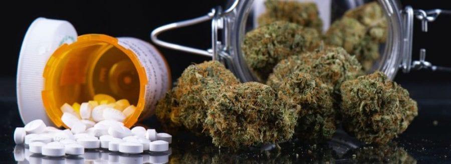 cannabis, opioids, endocannabinoids, endocannabinoid system, CBD, THC, CB1 receptors, CB2 receptors, pain relief, pain