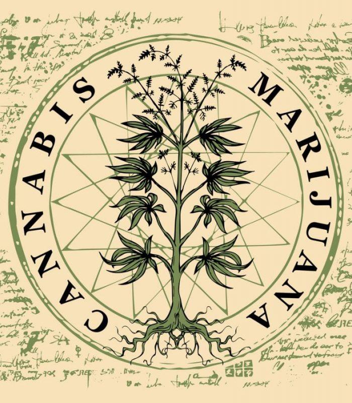 Prohibitionists Hijacked the Word Marijuana