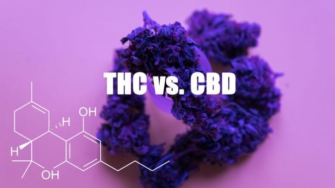 cannabis, CBD, THC, brain, paranoia, mental health, mental illness, anxiety, legalization, medical cannabis, endocannabinoid