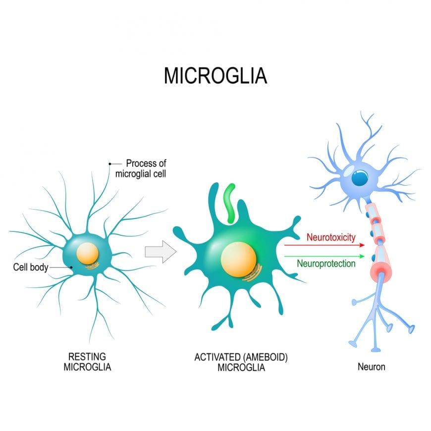 micrologia at work diagram