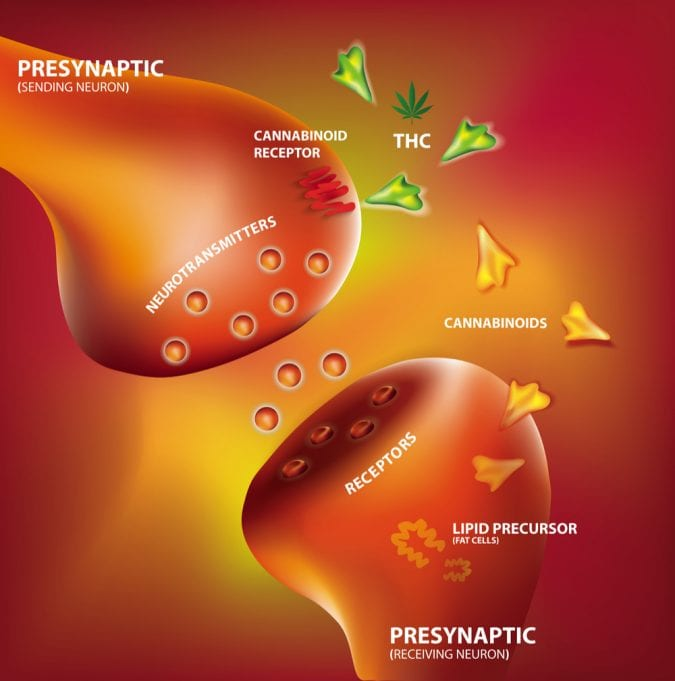 cannabis, endocannabinoid system, cannabinoids, stroke, MRIs, brain damage, brain health, endocannabinoids, medical cannabis