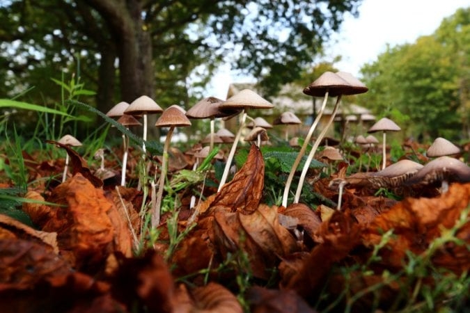 magic mushrooms, cannabis, cannabinoids, medical cannabis, THC, CBD, FDA, DEA, USA, medicaid, Epidiolex
