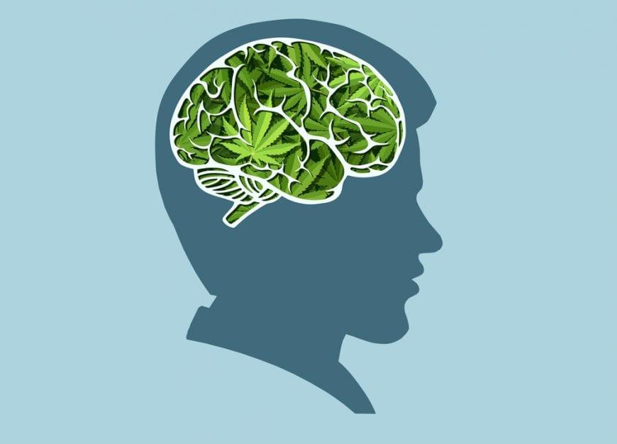 cannabis, TS, OCD, anxiety, Tourette's Syndrome, Tourette's, cannabinoids, THC, CBD, insomnia, medical cannabis