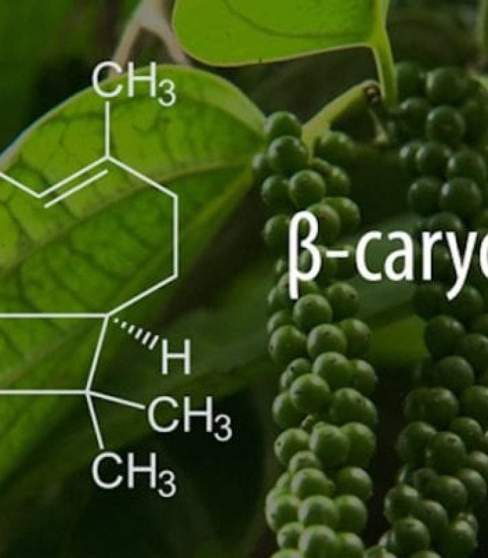 """True Terpenes"" Boost Therapeutic Value of Cannabis"