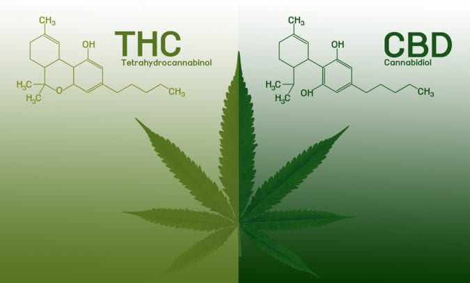 cannabis, recreational cannabis, medical cannabis, cannabinoids, CBD, THC, endocannabinoid system, research, legalization, scientific studies