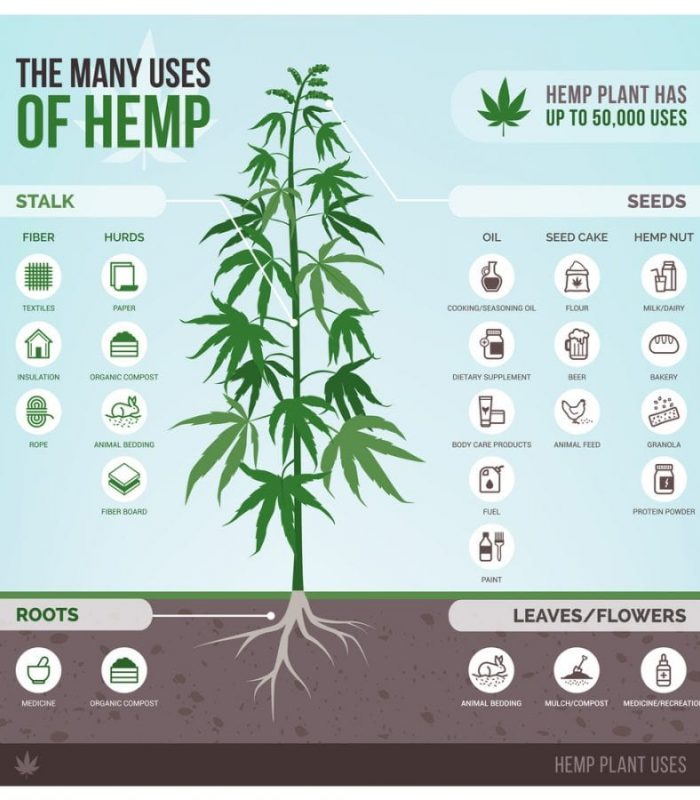 Hemp Seeds and Hearts Are a Delicious, High Protein, Nutritional Champ!