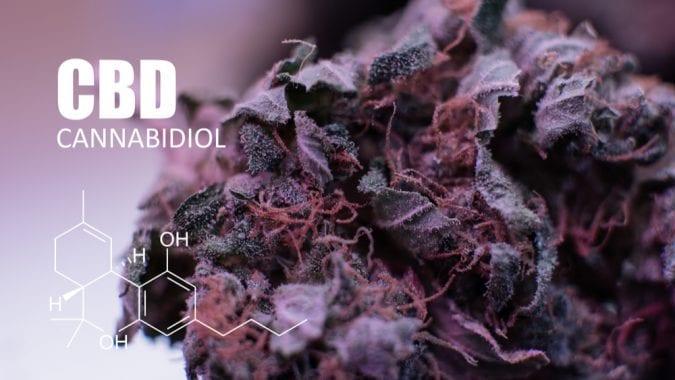cannabis, CBD, THC, cannabinoids, medical cannabis, recreational cannabis, epilepsy, seizures, Big Pharma, pharmaceuticals, opioids
