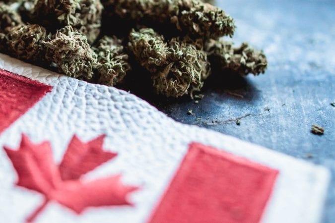 cannabis buds beside canada flag