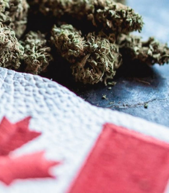 Cannabis Shortage From Canada to California - What Now?