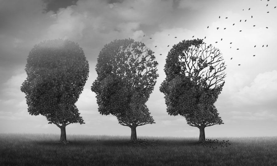 cannabis, memory, memory loss, brain function, brain, research, studies, memory studies, CBD, THC, cannabis use, medical cannabis