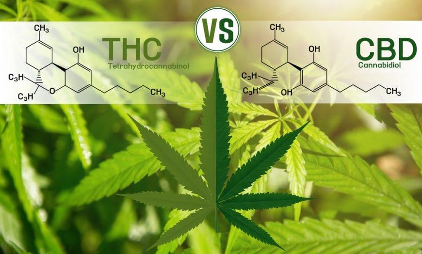 cannabis, medical cannabis, recreational cannabis, THC, CBD, legalization, research, pain relief, pain, inflammation