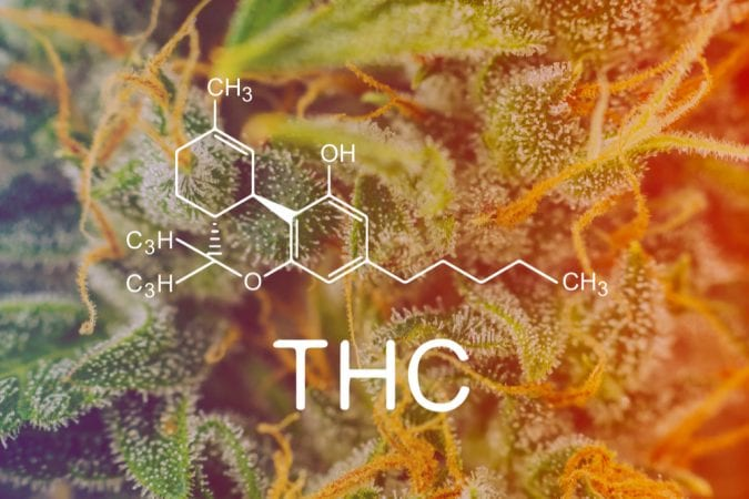 cannabis, CBD, THC, cannabinoids, cancer, cannabinoid receptors, endocannabinoid system, immunotherapy, DNA, cancer cells