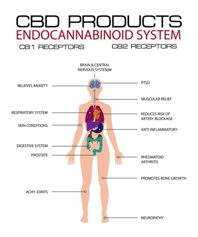 cannabis, endocannabinoid system, cannabinoids, CBD, CBD oil, migraines, pain, pain relief, stress, stress relief