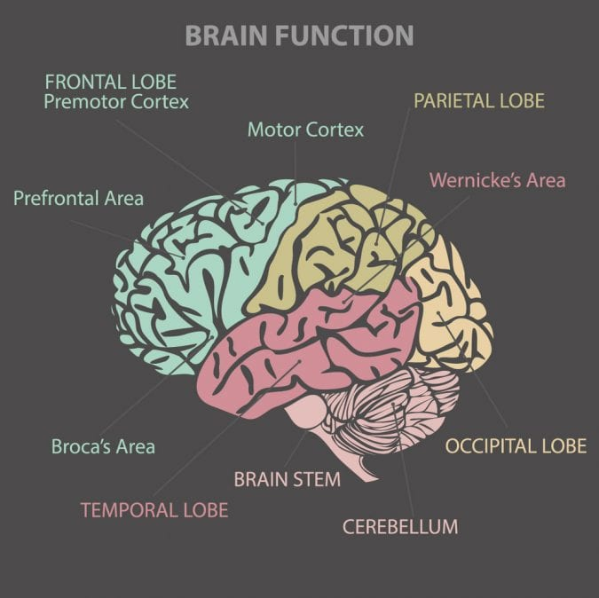 cannabis, brain function, CBD, THC, medical cannabis, paranoia, anxiety, mental health, mental illness, anxiety, legalization