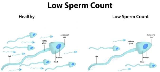 cannabis, CBD, THC, cannabinoids, endocannabinoid system, mice, sperm count, fertility, women, men, ovaries