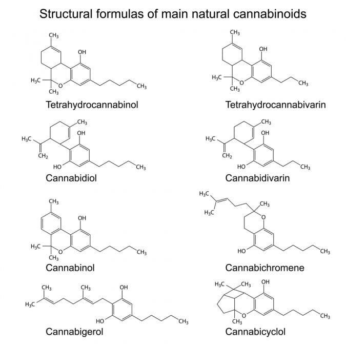 cannabis, cannabinoids, THC, research, Israel, Mechoulam, USA, legalization, prohibition, federal government, federal laws, Canada, medical cannabis