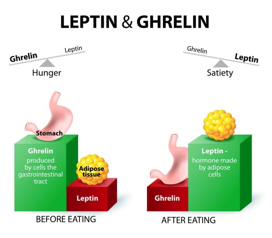 cannabis, ghrelin, appetite, appetite loss, hunger, hormones, medical cannabis, research, cancer, anxiety, HIV/AIDS, chemotherapy