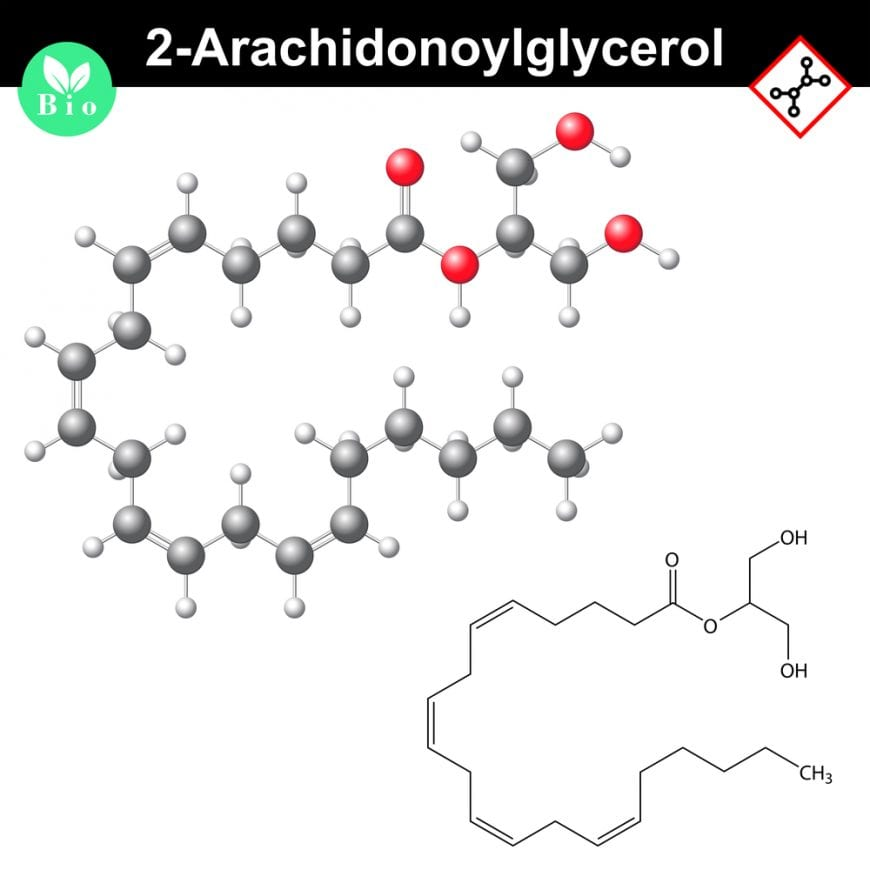 makeup of 2-arachidonoylglycerol a chemical in liverworts