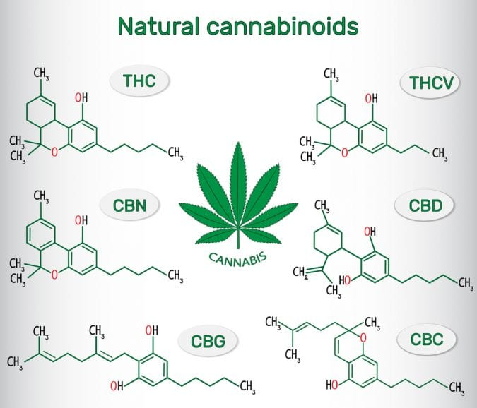 cannabis, cannabinoids, CBD, THC, CBG, endocannabinoid system, research, medical cannabis, recreational cannabis, health benefits