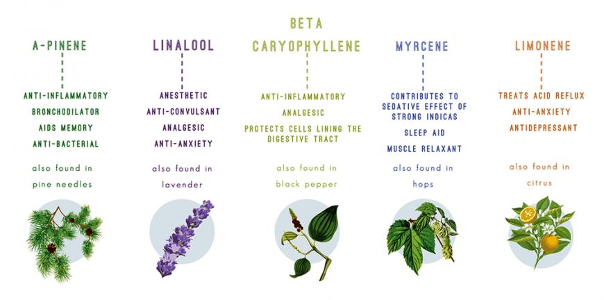 terpene medicinal benefit