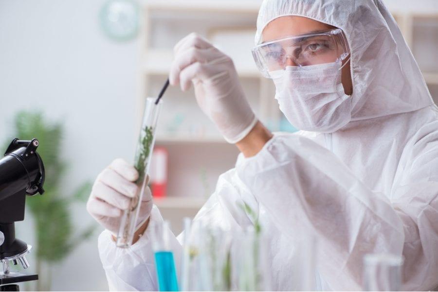 cannabis, cannabis research, medical research, medical cannabis, recreational cannabis, Israel, Canada, funding, cannabinoids, health benefits, health risks, legalization, DEA