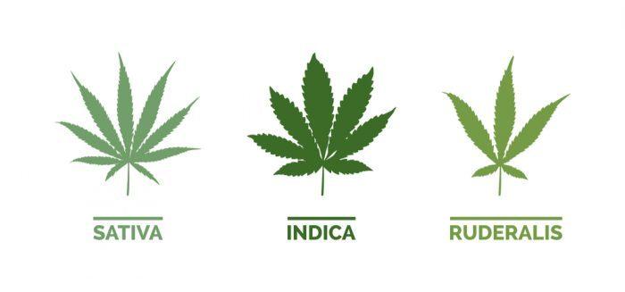 legalization in 2018