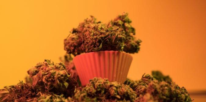 cannabis, medical cannabis, recreational cannabis, legalization, craft cannabis, artisan dispensaries, small-scale grow ops, industrial farms, Canada, USA