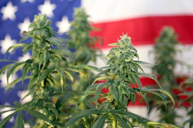cannabis, USA, FDA, DEA, federal laws, legalization, prohibition, recreational cannabis, medical cannabis, synthetic cannabis, synthetic cannabinoids
