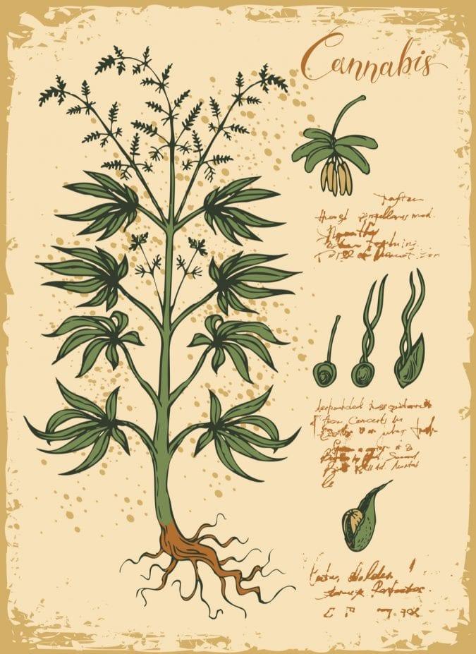 cannabis, indica, O'Shaughnessy, Moreau, Europe, Asia, medical cannabis, recreational cannabis, healers, apothecaries