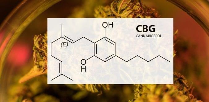 cannabis, cannabinoids, CBG, CBD, THC, endocannabinoid system, cancer, prostate cancer, research, phytocannabinoids, medical cannabis