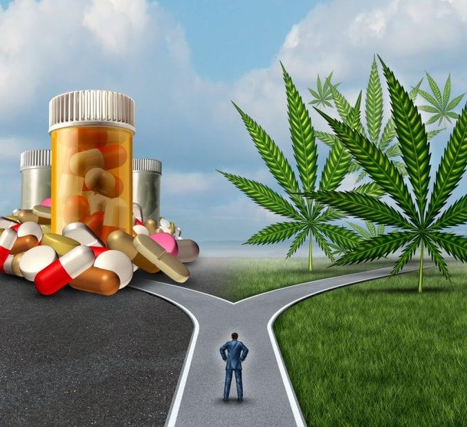 cannabis, opioids, opium, opiates, medical cannabis, legalization, USA, Canada, Europe, addiction, overdose