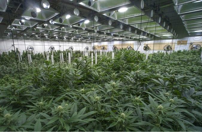 cannabis, industrial farms, medical cannabis, recreational cannabis, legalization, Canada, USA, artisan dispensaries, craft cannabis, small-scale farms